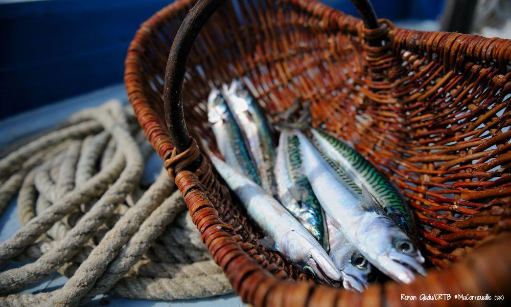 Sardines MaCornouaille