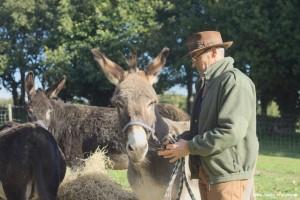 Avec un âne de bât en Pays Bigouden