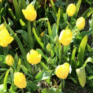La fête des fleurs à la Torche