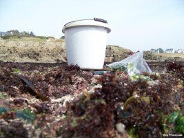 Du rocher à la tartine : les algues !
