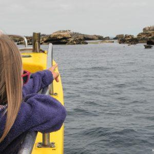 Balade à la découverte des phoques gris