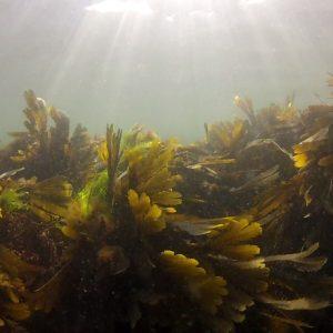 Des richesses sous-marines… à portée de palmes