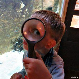 Retour sur notre visite de l'Aquashow à Audierne